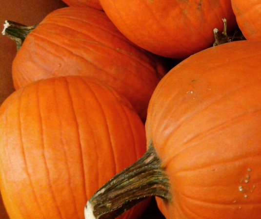 Pumpkins are only $1.99 at ALDI!