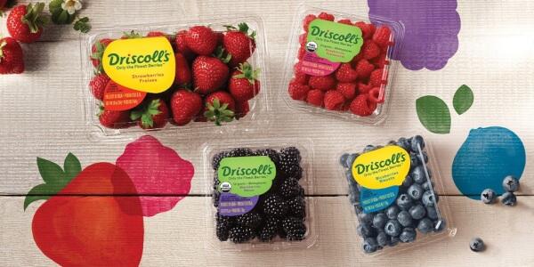 driscolls berries